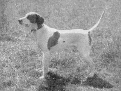 1958 Champion, Little Bob